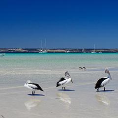 Airport_Pelicans-Island-Beach_Merendi-Y