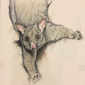 Airport Art - Merril Hansen - Possum