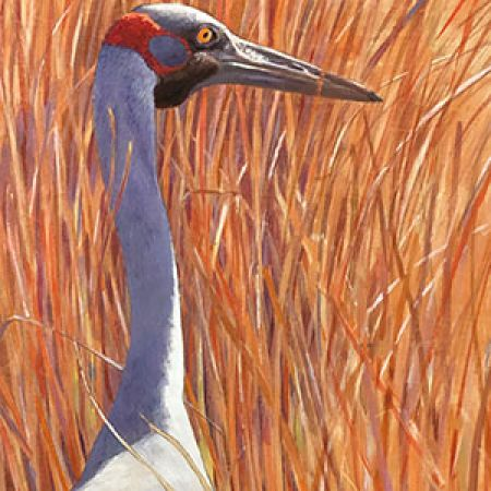 Airport Art - Nick Pike - Brolga I