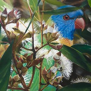 Airport Art - Kathy O'Brien - KI Lorikeet In Gum Blossum