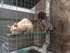 Cat Enclosure 15